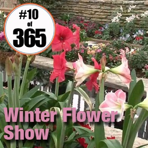 Day 10 of 365, Como Zoo and Conservatory - Winter Flower Show #365TC