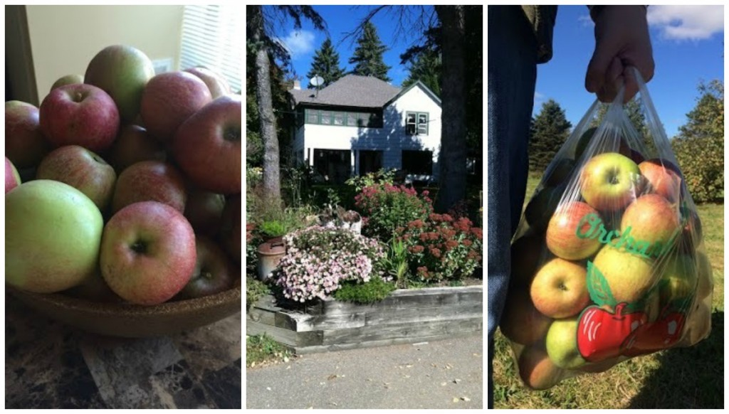 Day 281 of 365 Aamodt's Apple Farm #365TC