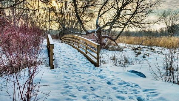 Day 5 of 365, Walk the MN Landscape Arboretum - January 5, 2015 #365TC